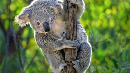 【寒假/春節澳新凱 全境環游典藏版12日】墨爾本·凱恩斯·黃金海岸·布里斯班·新西蘭·悉尼12日之旅