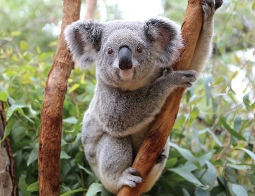 【1月份去澳洲旅游 澳新凱12日游】澳大利亞+墨爾本+新西蘭北島+凱恩斯+黃金海岸+大堡礁12日游