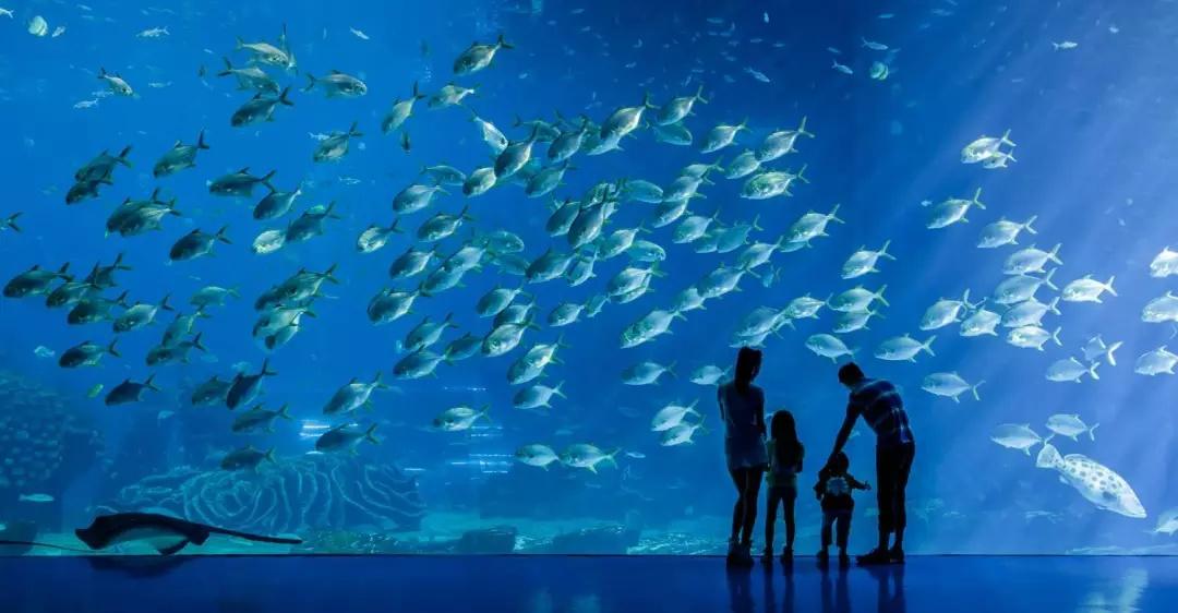 【繽紛圣誕】廣州+珠海兩地長隆豪華深度雙飛5日游 珠海長隆海洋王國+廣州長隆野生動物世界+國際大馬戲+歡樂世界