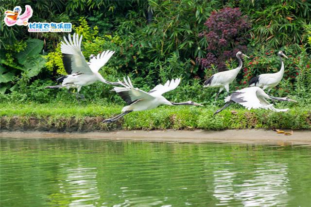 廣州長隆飛鳥樂園